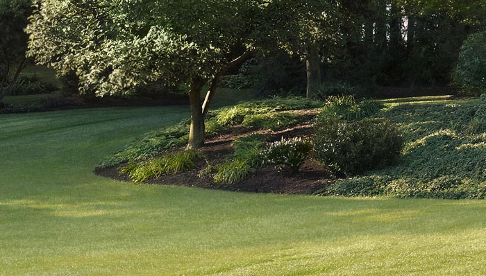 Lawn Care Ideas Steps For A Beautiful Tips Home
